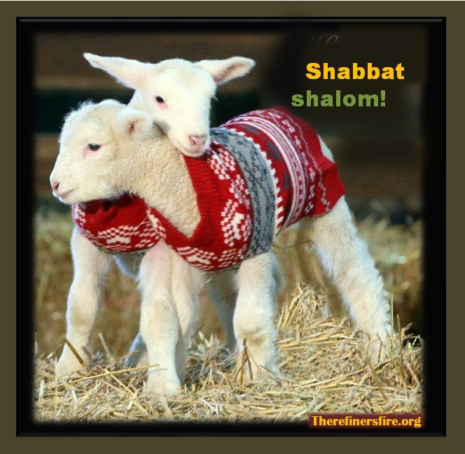 [Poster_lambs%5B3%5D]