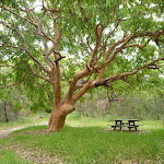 Tree and picnic table in Awabakal Nature Reserve (391712)