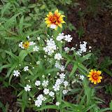 Gardening 2010, Part Two - 101_2933.JPG