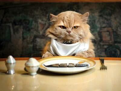 Ternyata Enam Makanan Ini Berbahaya Untuk Kucing  Ternyata Enam Makanan Ini Berbahaya Untuk Kucing 110