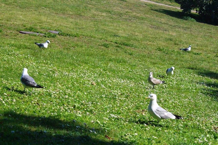 suomenlinna grass clean island