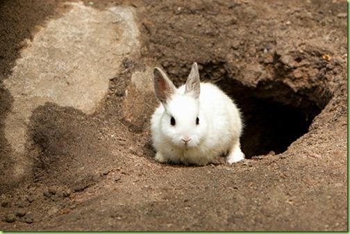 white-rabbit-exiting-rabbit-hole