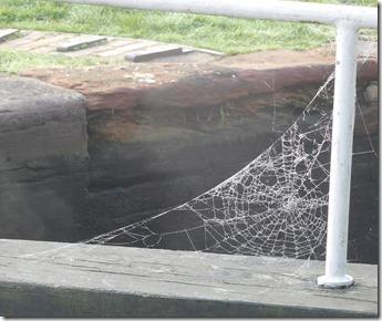 9 cobweb