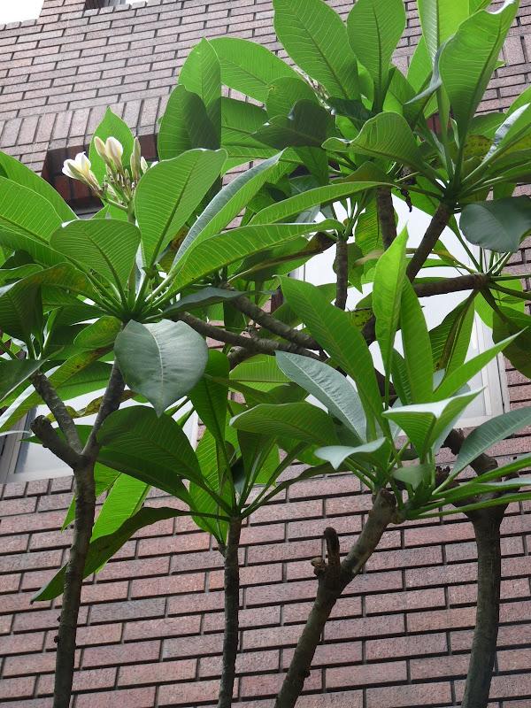 TAIWAN.Taipei - P1110307.JPG