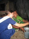 A PV tries her hand at milking a buffalo