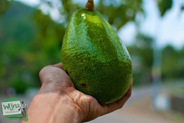 Buah alpukat yang menjadi buah khas produksi Dusun Nogosari di Desa Nawungan, Selopamioro, Imogiri, Bantul, Yogyakarta