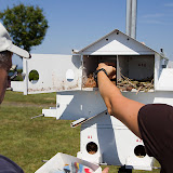 Purple Martin Banding Hammonasset Park July 2012 - BC3G6175.jpg