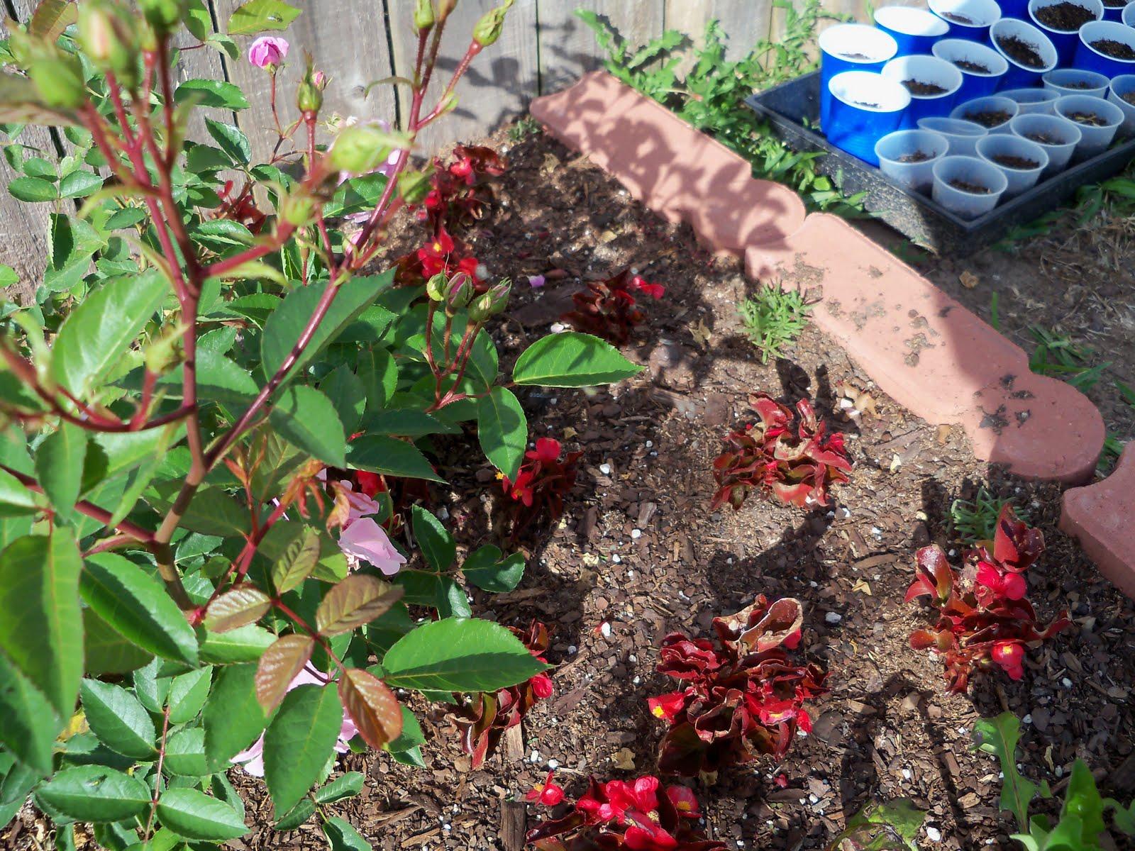 Gardening 2010 - 101_0998.JPG