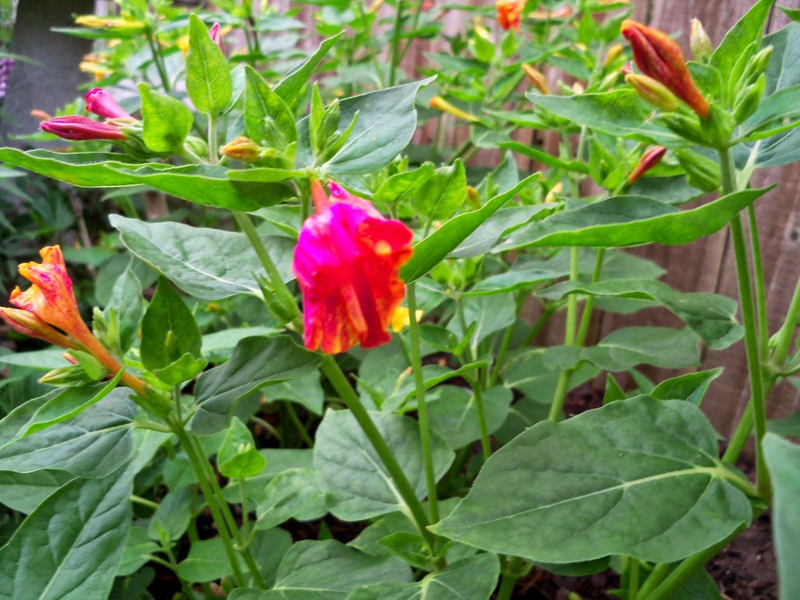Gardening 2014 - 116_1817.JPG
