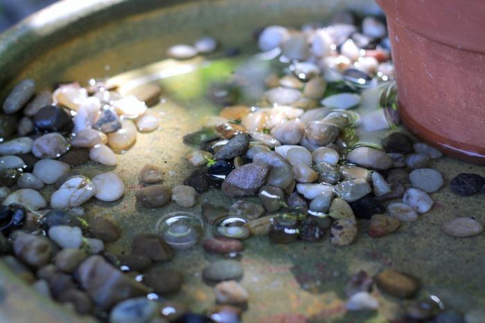 DIY Butterfly Bath for your garden