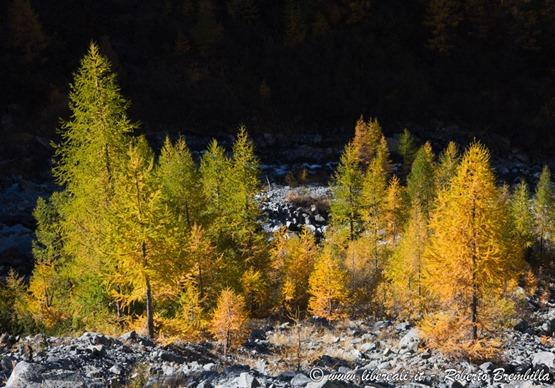 2015-10-11_Chiareggio-Porro_Valmalenco_153