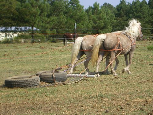 Bell and Bit pulling at Lp Painted Ponys