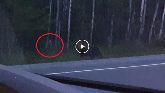 O que é essa criatura que aparece na floresta