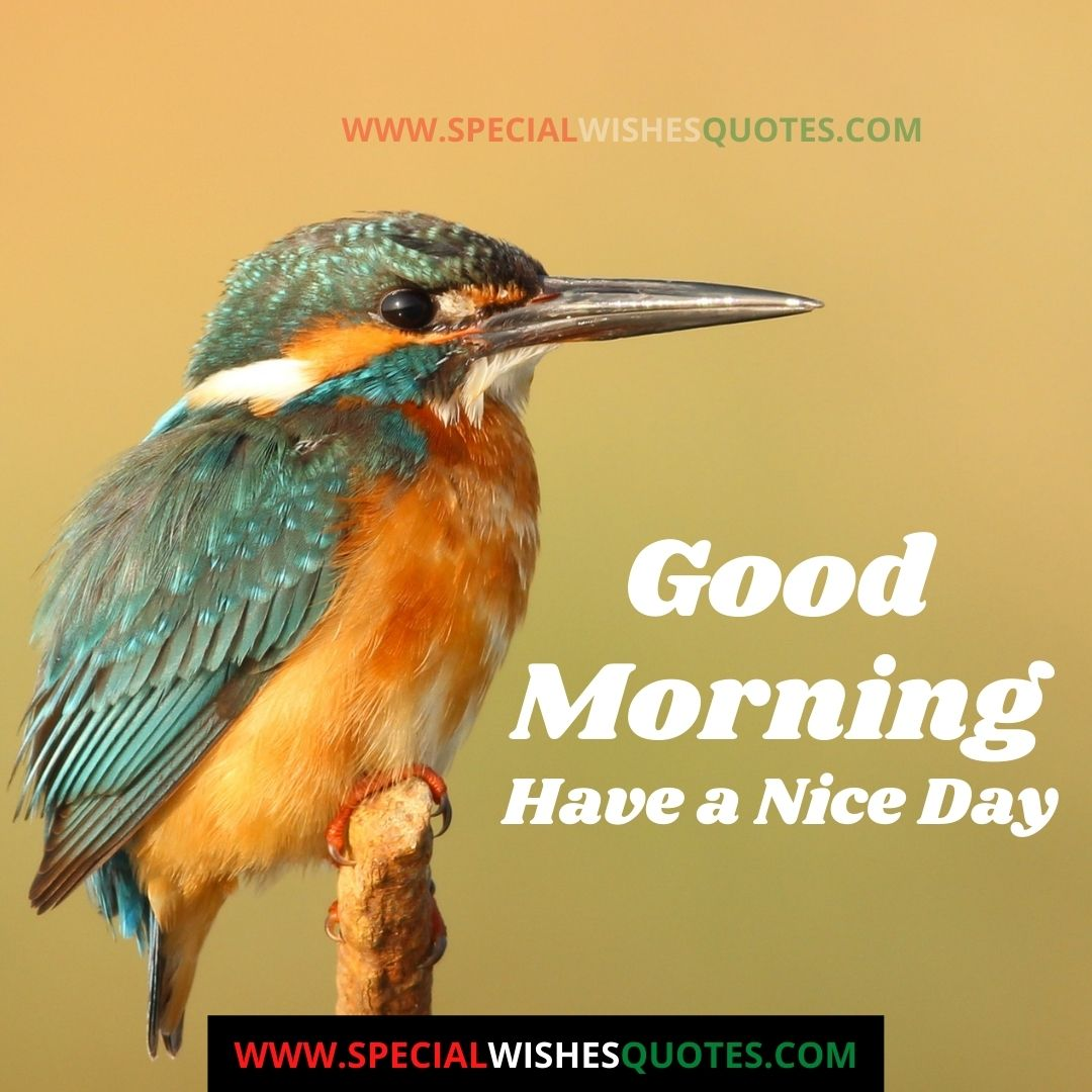 good morning tuesday images for whatsapp