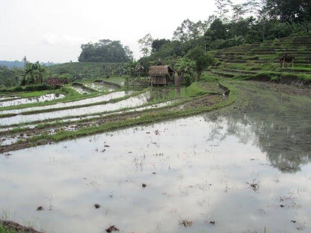 Sidemen road Bali