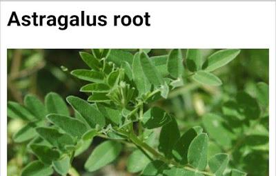Astralagus membranaceus