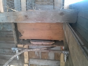 free-range chicken waterer - view from inside the coop