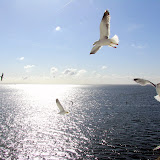 特塞尔岛 Texel