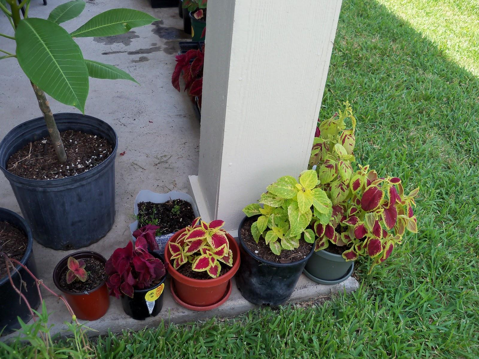 Gardening 2010, Part Three - 101_4911.JPG