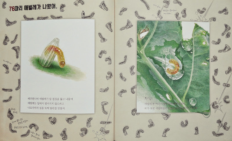 배추흰나비 알 100개는 어디로 갔을까?