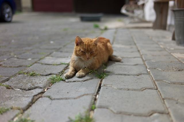 čierna mokré mačička zadok mama sex video trubice