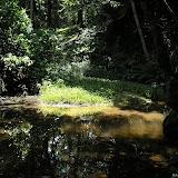 En forêt à l'est de Curitiba, Paraná. 25 janvier 2007. Photo : Mauricio Skrock
