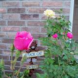Gardening 2011 - 100_7768.JPG