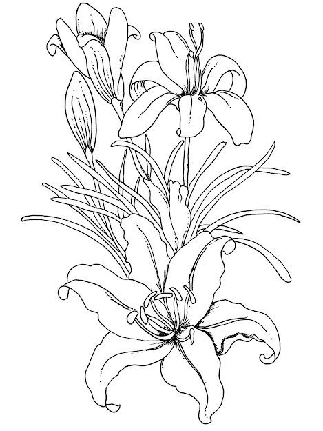 Free Coloring Pages For Adults Printable Hard To Color Image