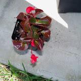 Gardening 2010 - 101_0583.JPG