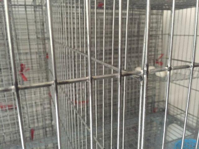 Chuổng nuôi chim bồ câu A3  01
