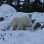 0161_Kanada_15-Nov-11_Limberg.jpg
