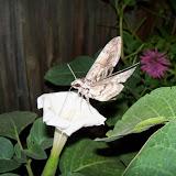Gardening 2014 - 116_3614.JPG