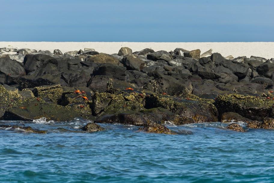 galapagos - Galapagos_FB-44.jpg