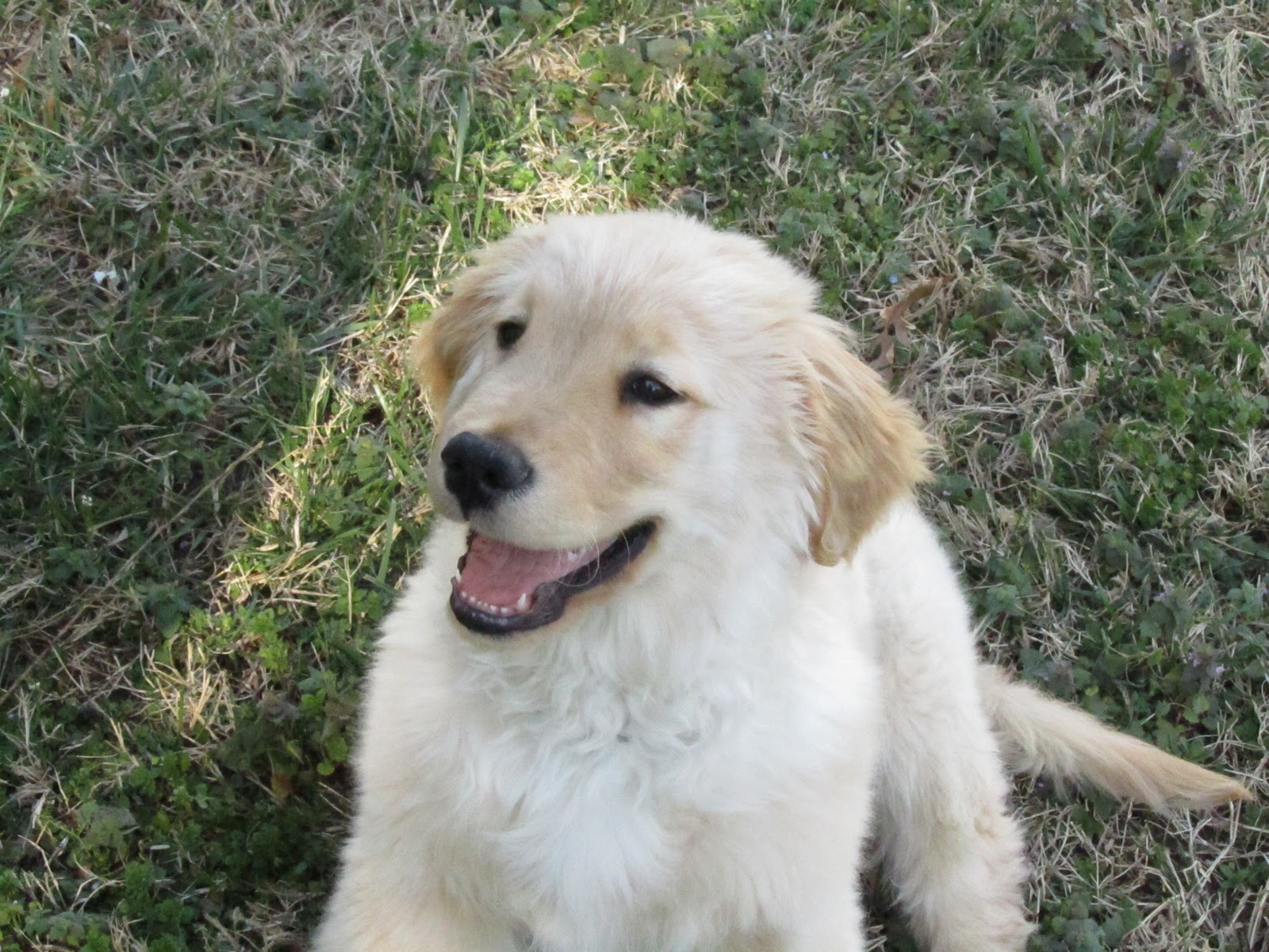 Displaying 16> Images For - Happy Puppy Face...