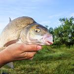 20140624_Fishing_BasivKut_011.jpg