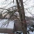 Bomen Bovensmilde 24-12-2009
