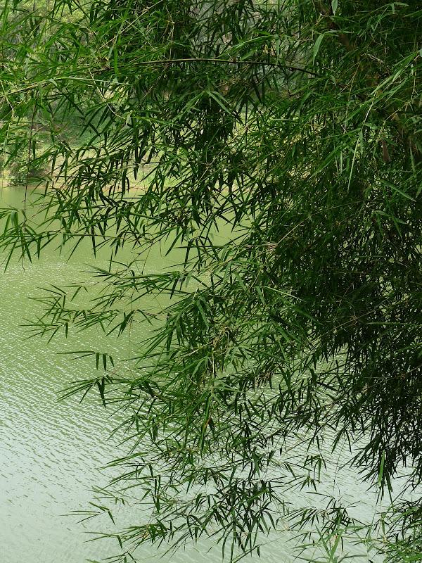 Chine . Yunnan..Galamba, Menglian Album A - Picture%2B399.jpg