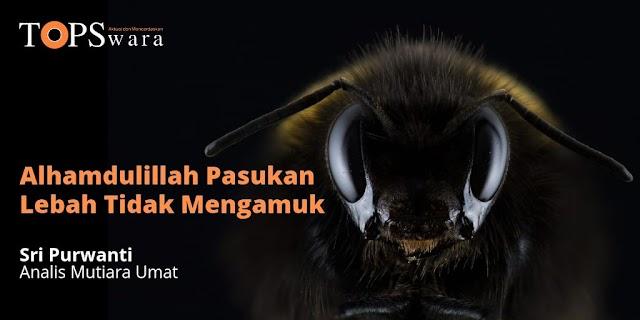 Alhamdulillah Pasukan Lebah Tidak Mengamuk