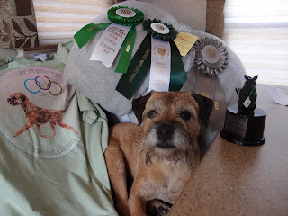 Mardi, age 8 1/2 yrs. with all of her awards from the Border Terrier National Specialty,  June 2012.