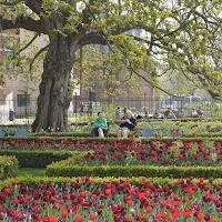 Jardins du Rijksmuseum