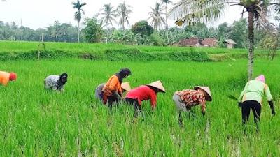 Bertani Solusi Paling Tepat Di Masa Pandemi Sampai Kiamat