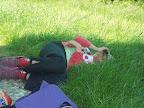 Nikša v trávě.