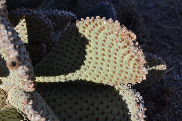 cactus stems