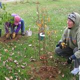Hammo Planting - Shannon Schiesser - IMG_4910.JPG