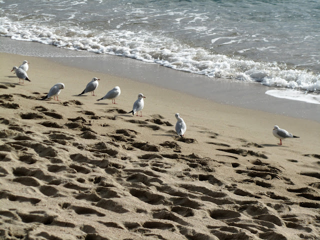 Local Area - Seagulls.jpg