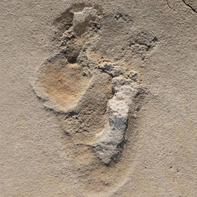 Histórico hallazgo en Grecia: encontraron huellas humanas de 6 millones de años de antigüedad