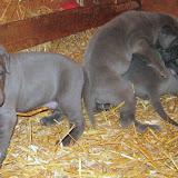 Bluebelle & Cobys 4/19/10 litter - IMG_0792.JPG