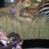 Houston Museum of Natural Science - 116_2772.JPG