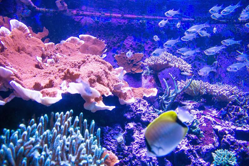 アクアワールド大洗水族館 写真12