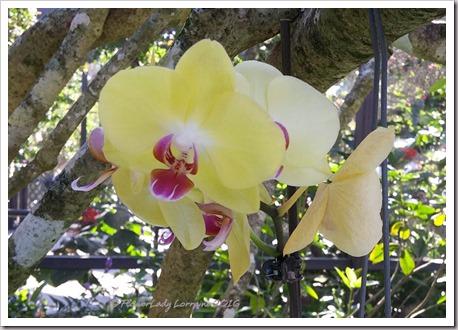 10-22-orchids